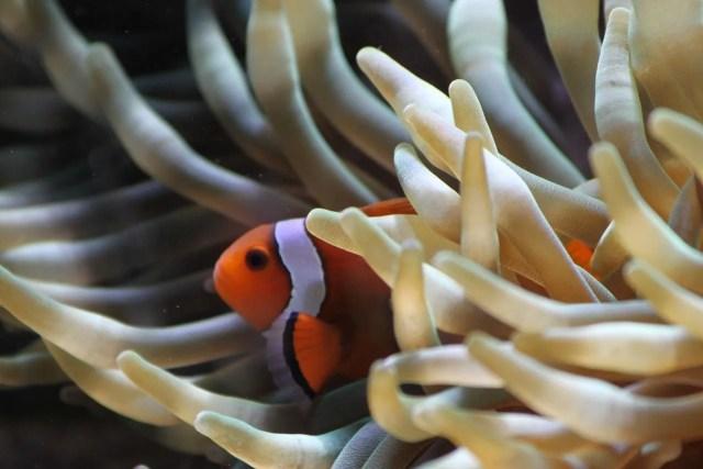 oxigenar el acuario marino