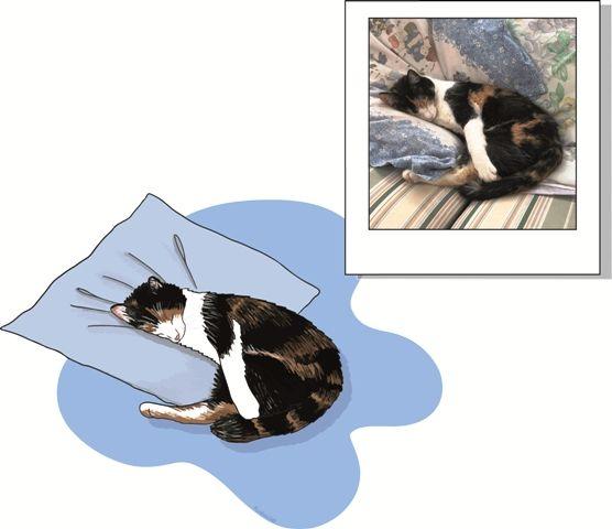 Retratos de mascotas gato durmiendo