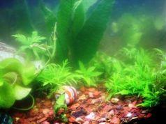 Explicar qué pasa si el acuario está lleno de algas