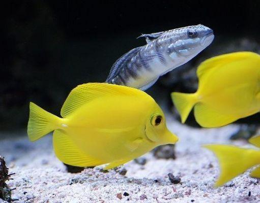 Como bajar los nitratos en acuario marino
