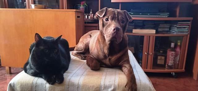 sofá con perro y gato