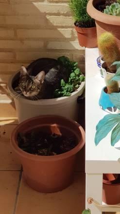 gato malo con las plantas