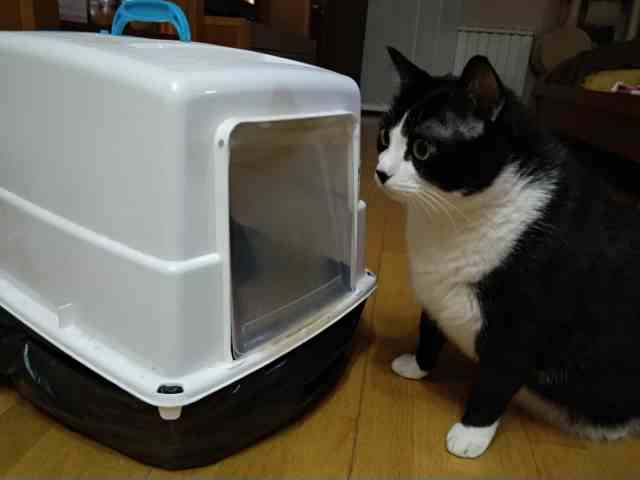 Qué arenero es mejor para un gato