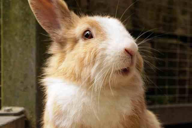 Arena de gatos para la jaula del conejo enano