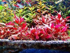 Como eliminar los fosfatos del acuario