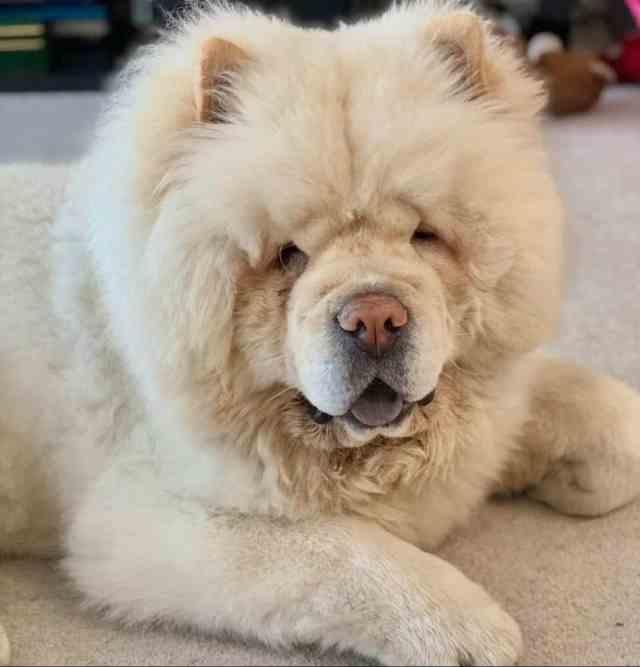 Perro grande o perro pequeño