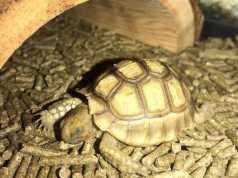Cómo duermen las tortugas de tierra