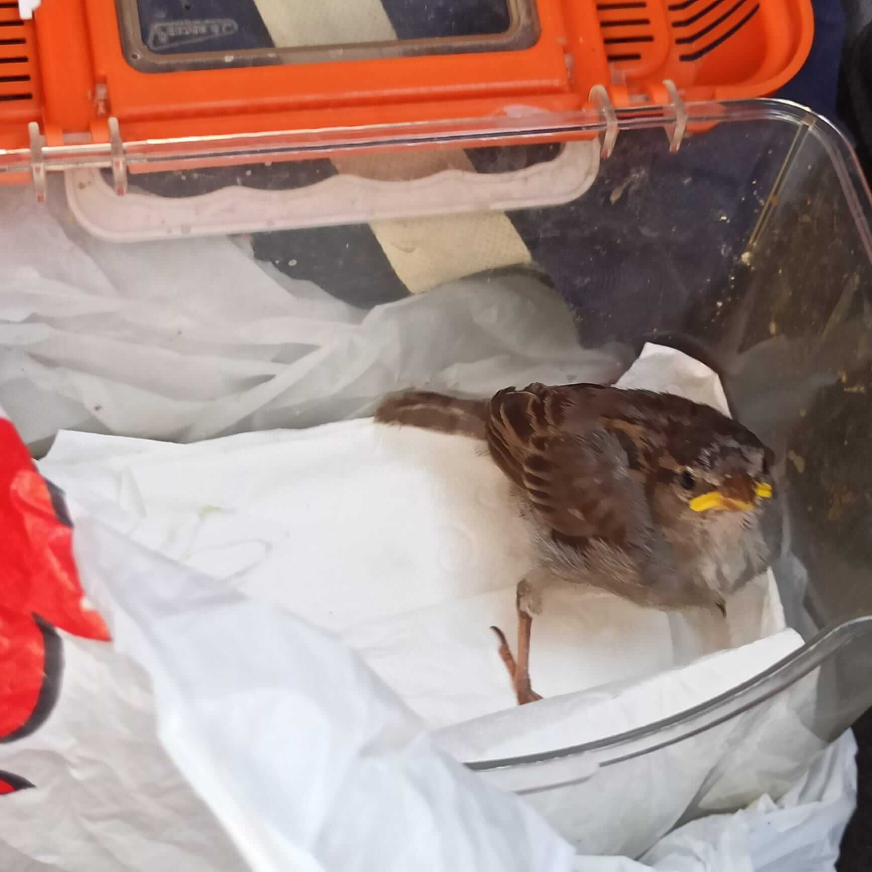 cómo cuidar un pájaro encontrado en el suelo.