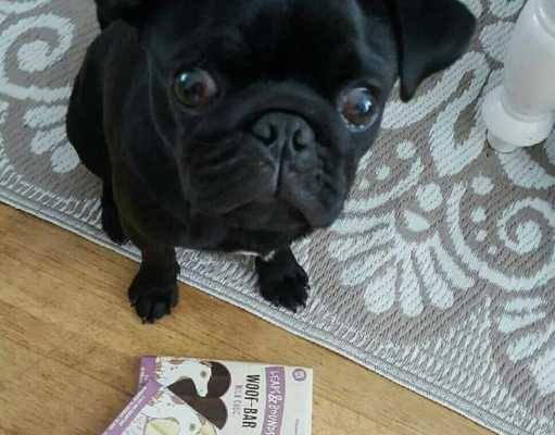 que pasa si el perro come chocolate