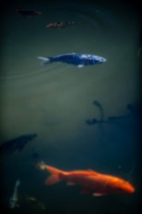 poissons_flous_temple-1