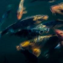 poissons_flous_temple-4