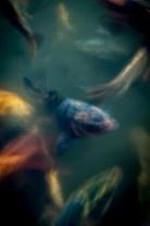 poissons_flous_temple-5