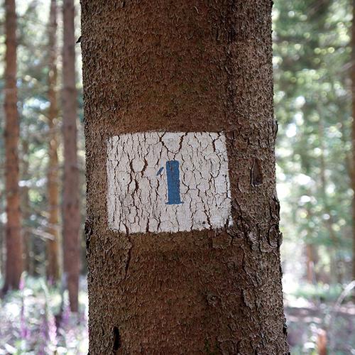Chiffre 1 Forêt
