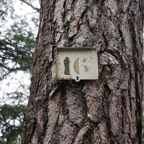 Chiffre 16 Forêt