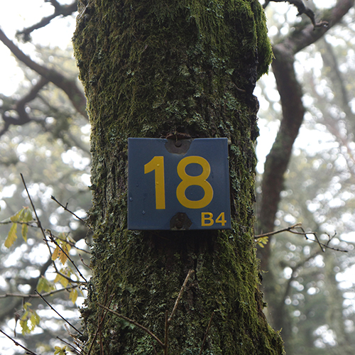 Chiffre 18 Forêt