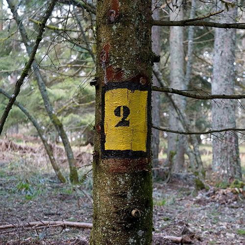 Chiffre 2 Forêt