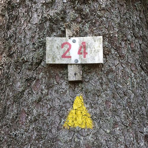 Chiffre 24 Forêt