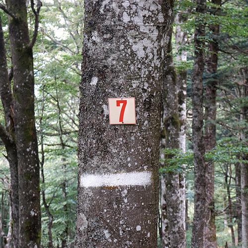 Chiffre 7 Forêt