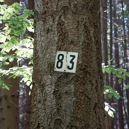 Chiffre 83 Forêt