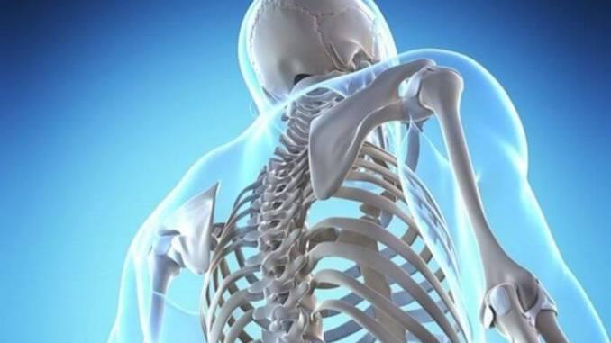 Trabajan en una yerba mate que beneficie la salud ósea