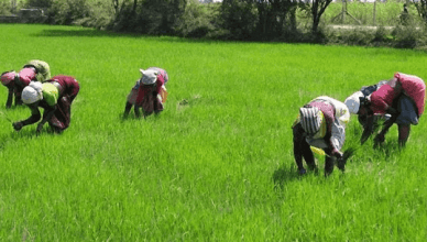 How to Access CBN Agriculture Loan in Nigeria