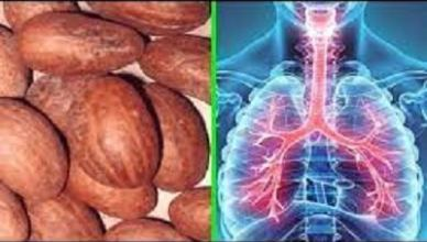 Bitter Kola Health Benefits and Side Effects to Humans