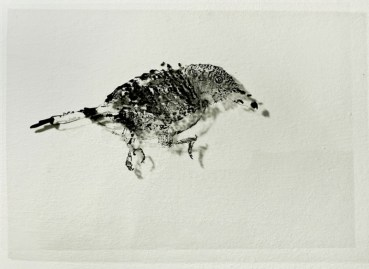 Tots Els Ocells Del Món @ Espai Tactel