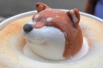 Shiba Inu latte