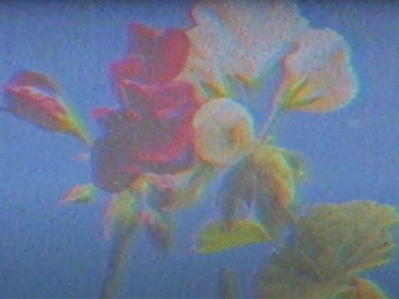 """""""Flowers"""" de Pedro Soler"""