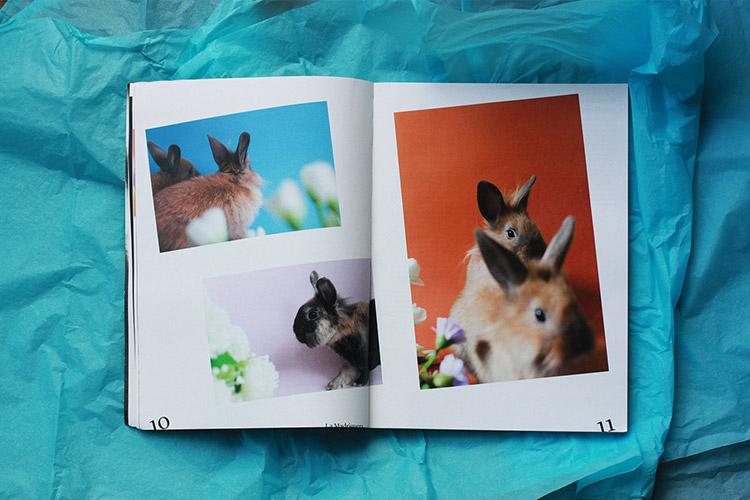 Agapornis Magazine