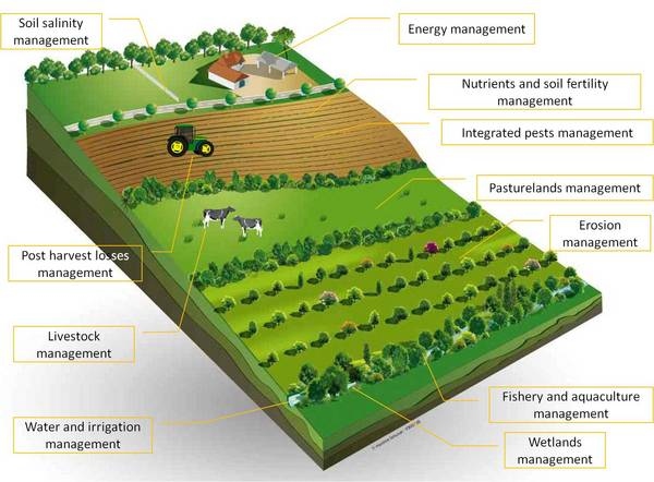 Resultado de imagen para sustainable agriculture