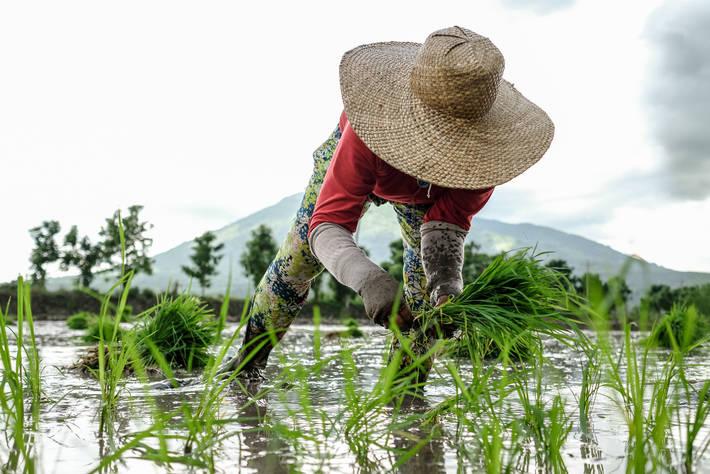 Photo: ©Veejay Villafranca/NOOR for FAO