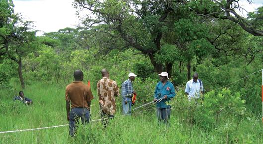 Таксация лесов дает исходные данные для участия в СВОД ...