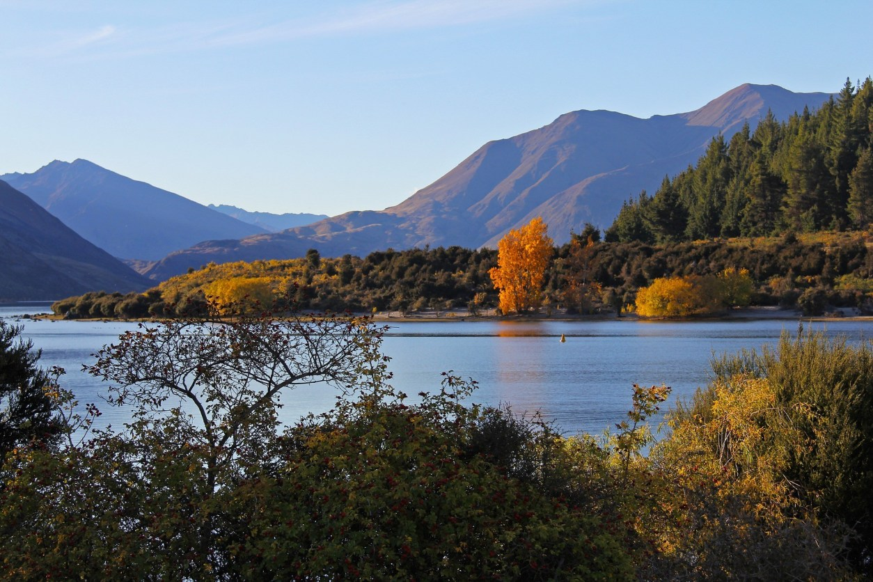 a-lake-at-golden-hour-sunset-in-autumn-fall-with-orange-leaves-on-trees-at-lake-wanaka