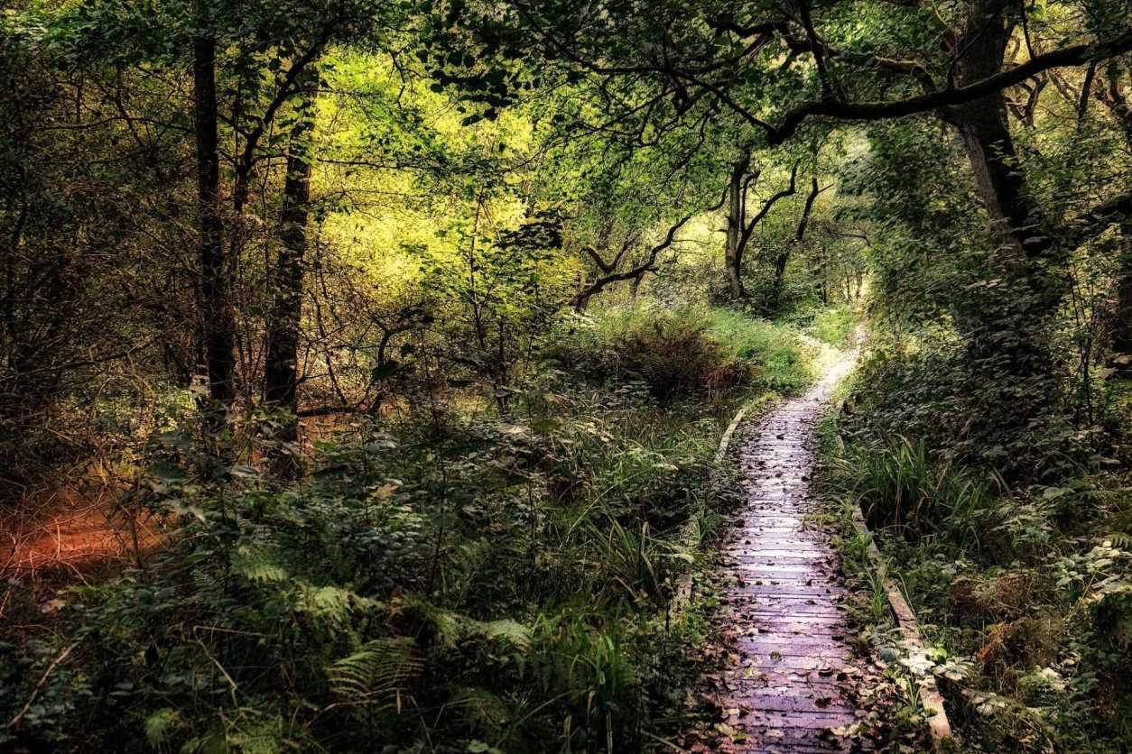 small-pathway-bridge-going-through-forge-valley-woods