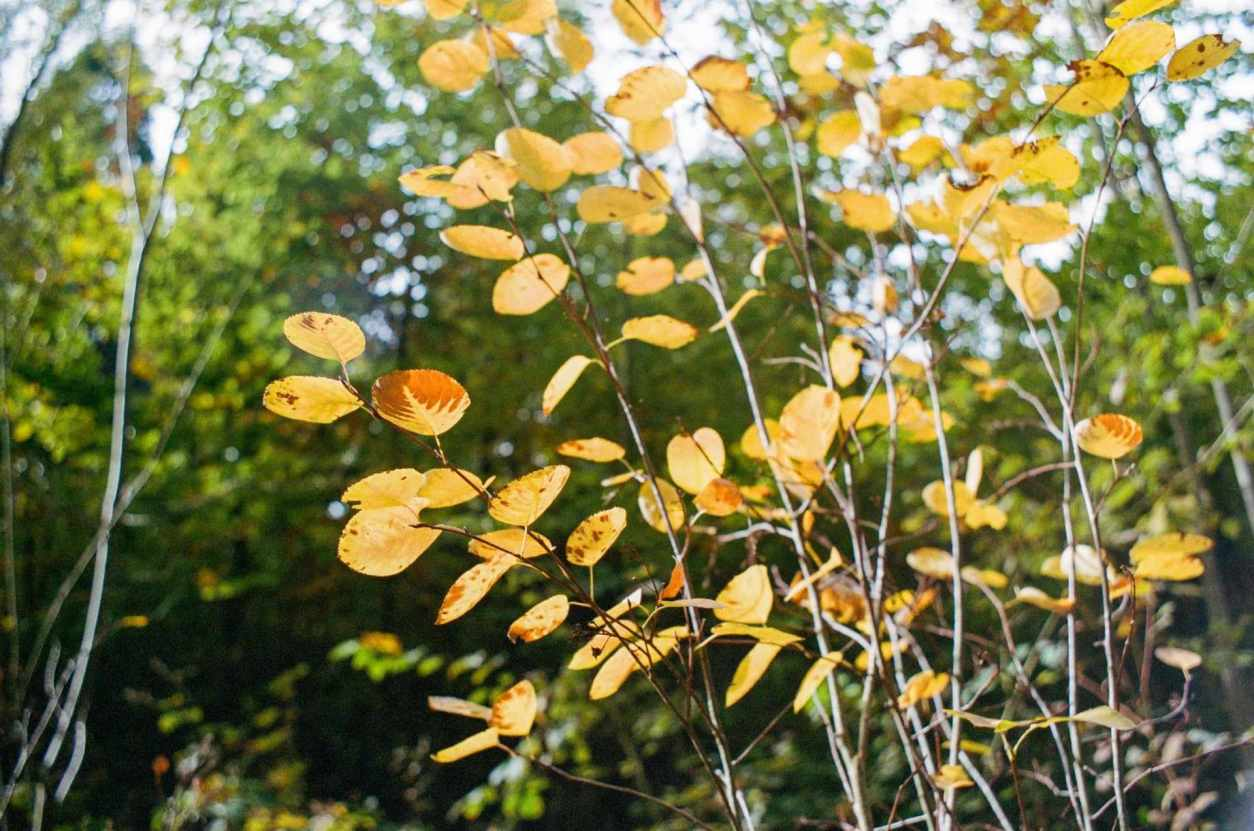 autumn-yellow-leaves-on-branch-during-daytime
