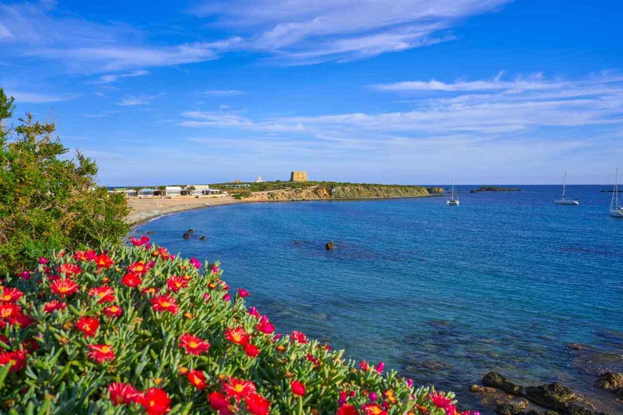 bright-flowers-by-sea-at-nova-tabarca-beach-in-alicante