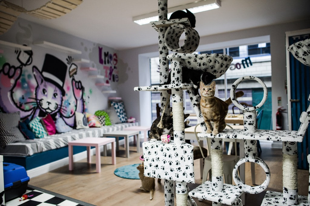 cat-on-cat-tree-at-mog-on-the-tyne-cat-cafe-indoor-activities-newcastle