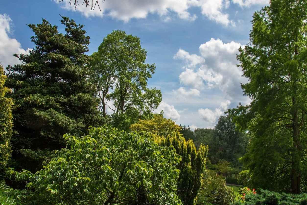 fletcher-moss-botanical-garden-on-sunny-day