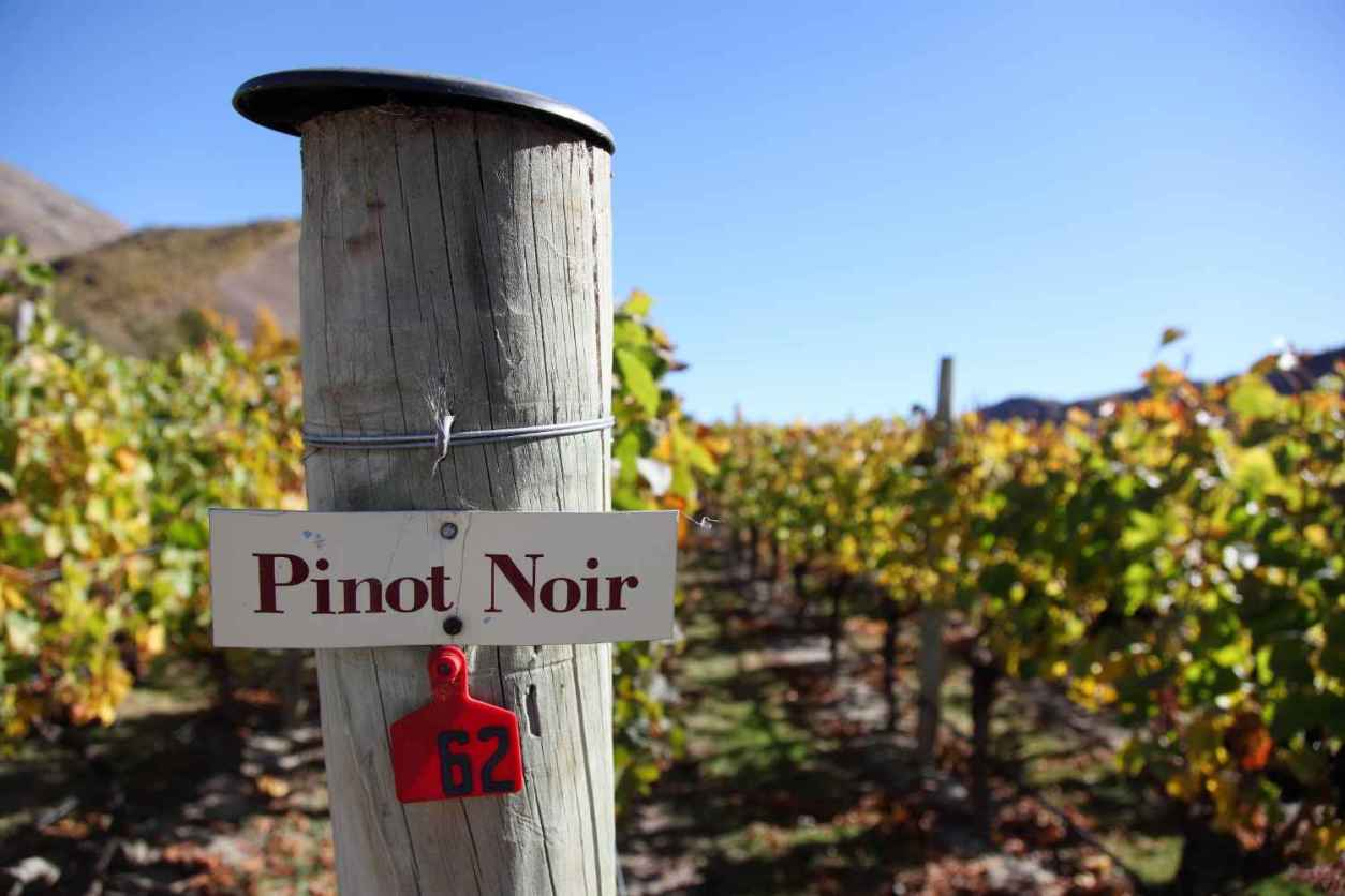 sign-for-pinot-noir-in-vineyard-at-gibbston-winery