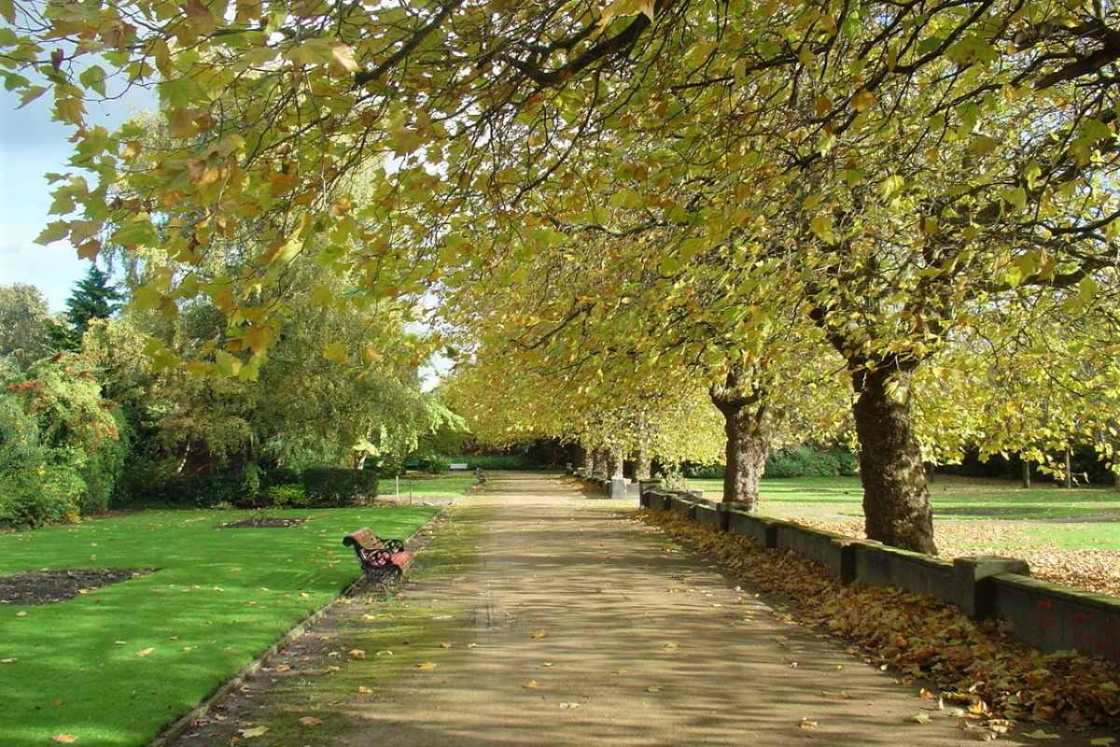 path-and-trees-in-wavertree-botanic-gardens