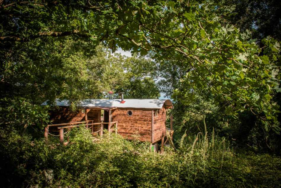 woodmans-wagon-treehouse-surrounded-by-trees
