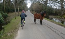 Passing New Forest Pony