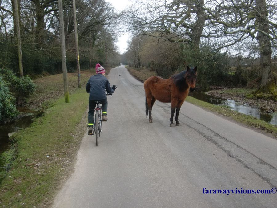 New Forest Bike Ride New Forest Pony