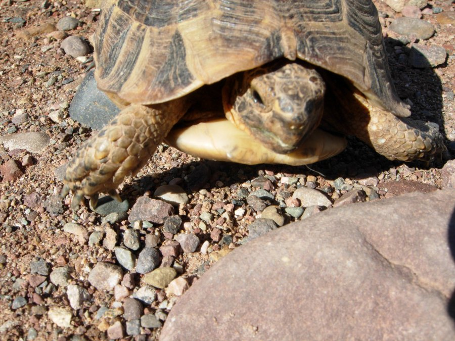 tortoise and rock