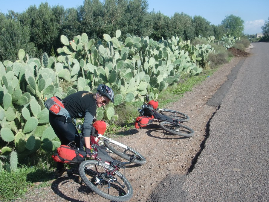 cactus hedge on the road to taroudant
