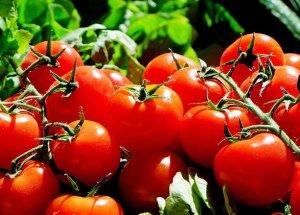 Tomaten schützen vor Krebs