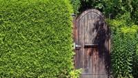 Hecke oder Zaun – farbenfrohe Ideen für den Garten