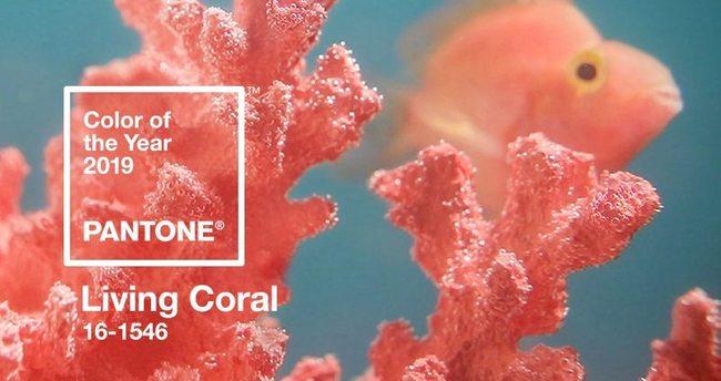 Pantone Farbe des Jahres 2019 ist Koralle