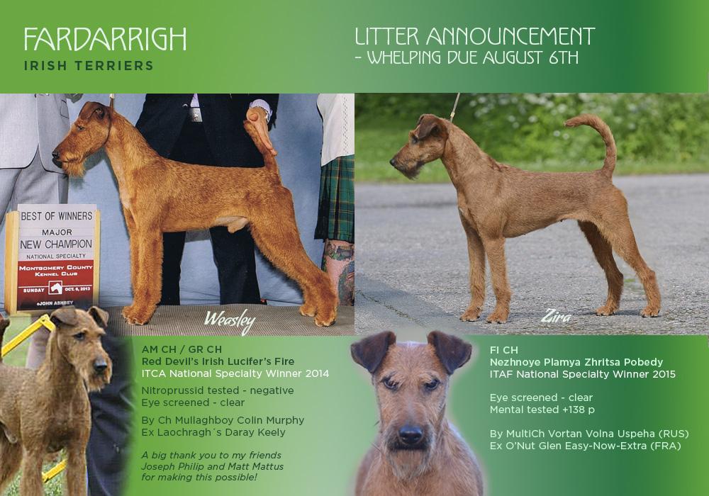 lucifer-zira-puppy-announcement-2016